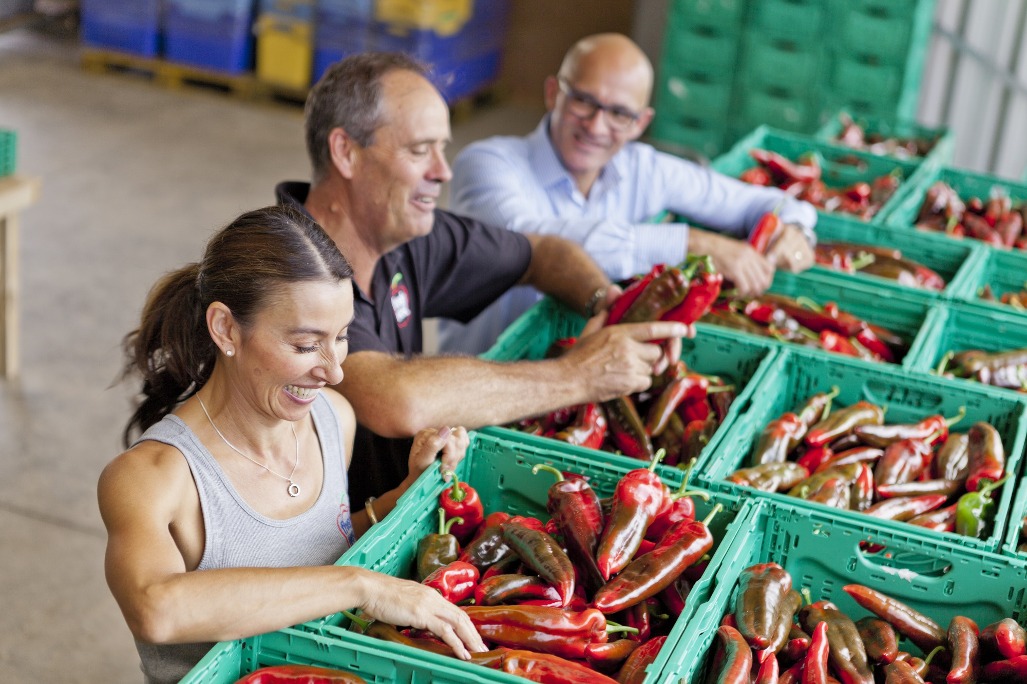 Freshwest, a family owned pepper business based in Glenbrook, New Zealand, has found its place in the market with the sweet pointed pepper, Sweet Palermo.